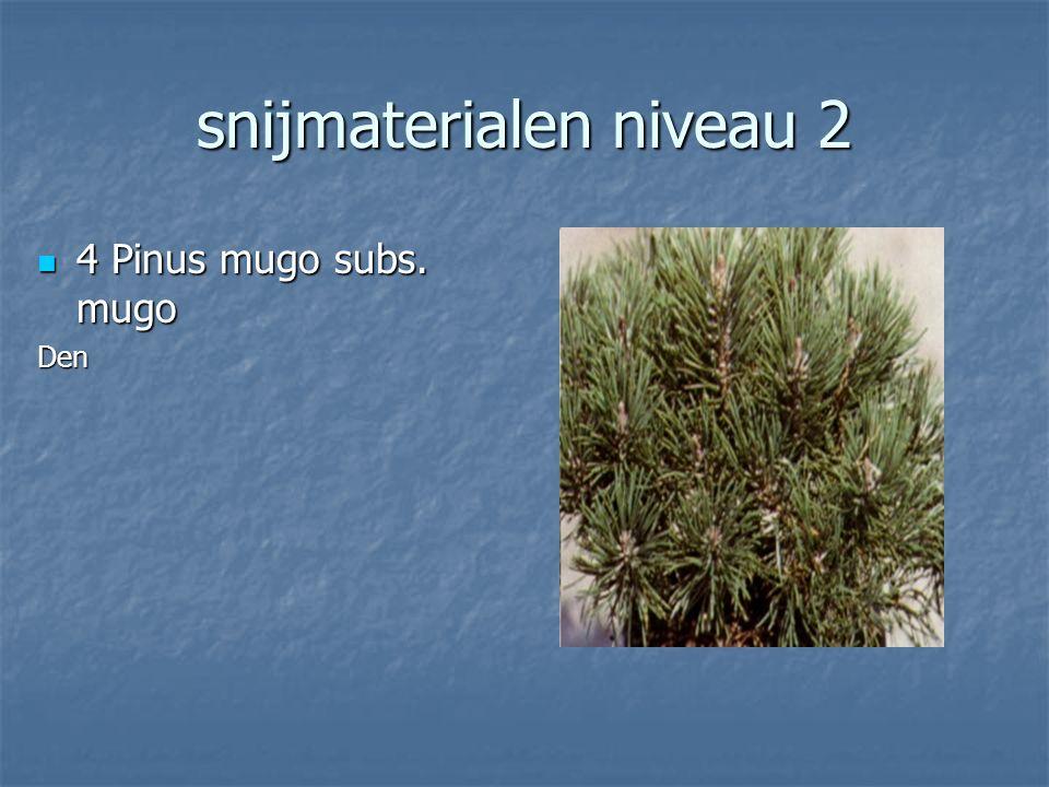 snijmaterialen niveau 2 3 Picea abies 3 Picea abiesKerstsparFijnspar
