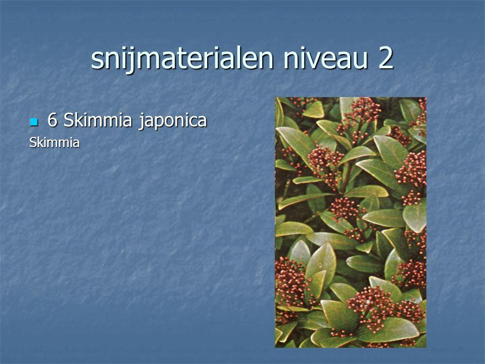 snijmaterialen niveau 2 5 Cornus alba 5 Cornus albaKornoelje