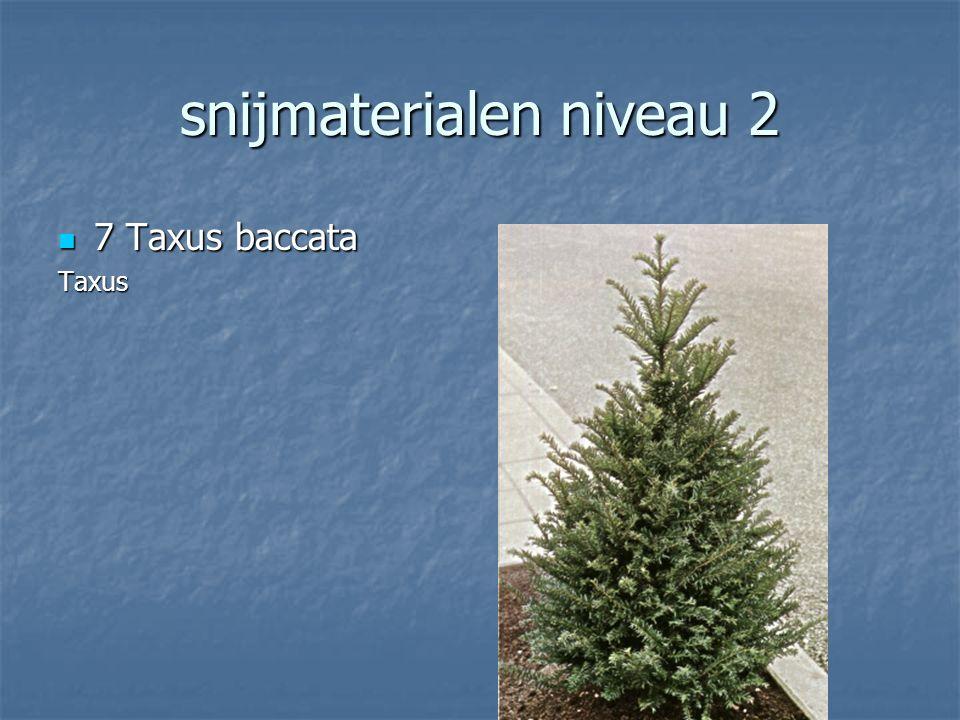 snijmaterialen niveau 2 6 Skimmia japonica 6 Skimmia japonicaSkimmia