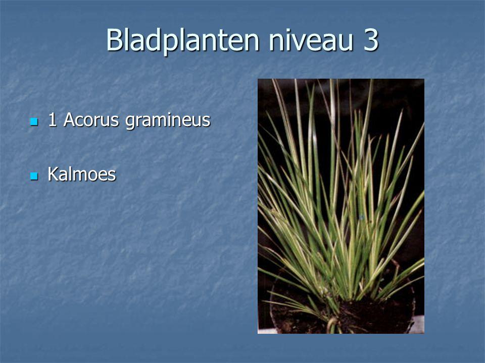 Kamerplanten Bladplanten niveau 3
