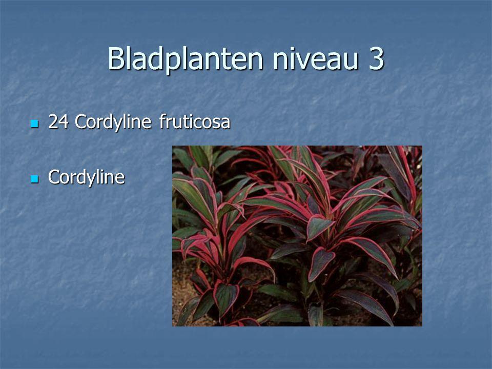 Bladplanten niveau 3 23 Cissus rhombifolia 23 Cissus rhombifolia Zweedse klimop Zweedse klimop