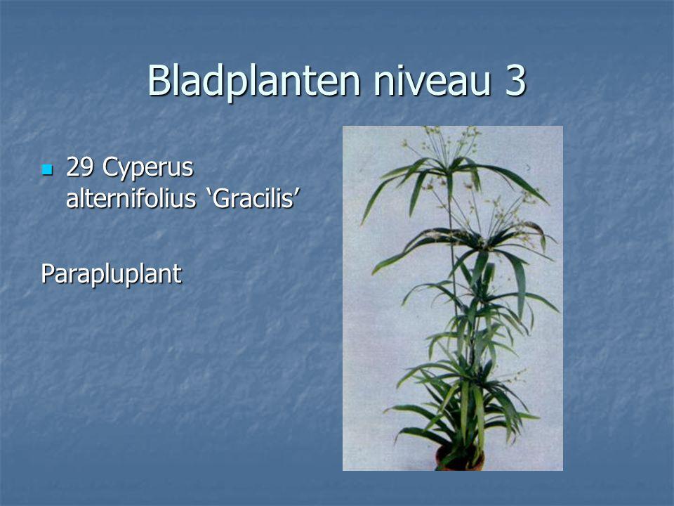Bladplanten niveau 3 28 Cycas revoluta 28 Cycas revolutaVredespalm
