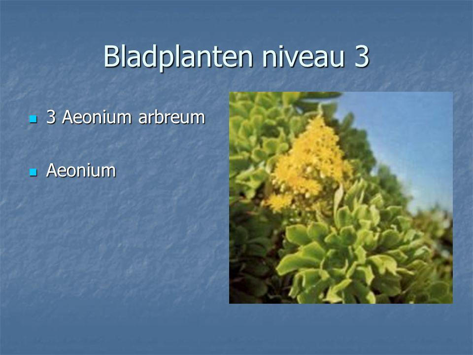 Bladplanten niveau 3 2 Adiantum raddianum Brillantelse 2 Adiantum raddianum Brillantelse Venushaar Venushaar