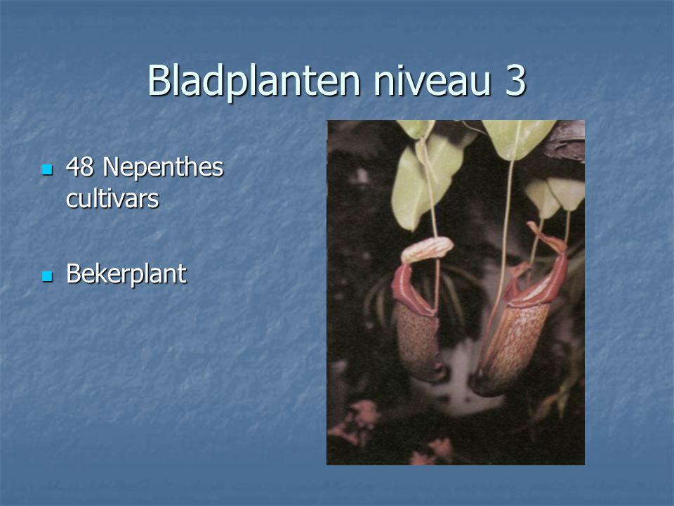 Bladplanten niveau 3 47 Neoregelia carolinae 47 Neoregelia carolinae Nestbromelia Nestbromelia