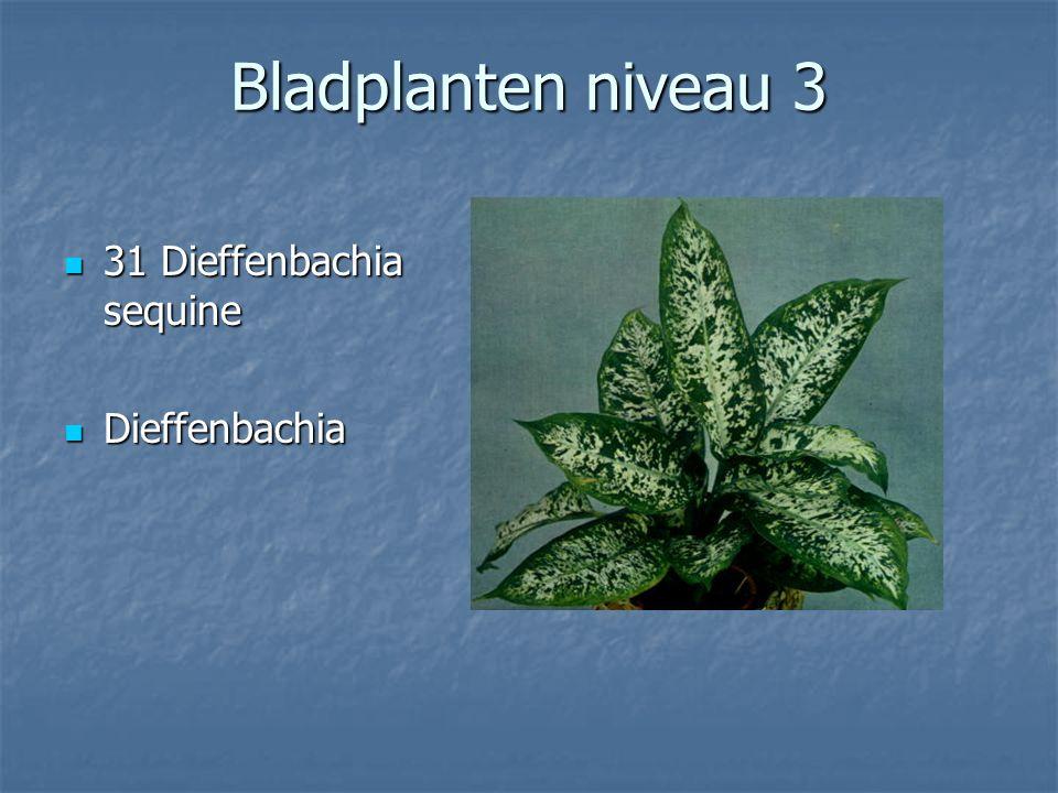 Kamerplanten Bladplanten niveau 3 31-70