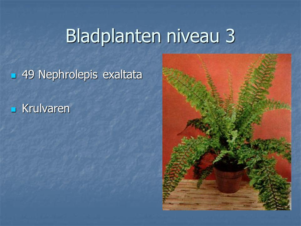 Bladplanten niveau 3 48 Nepenthes cultivars 48 Nepenthes cultivars Bekerplant Bekerplant