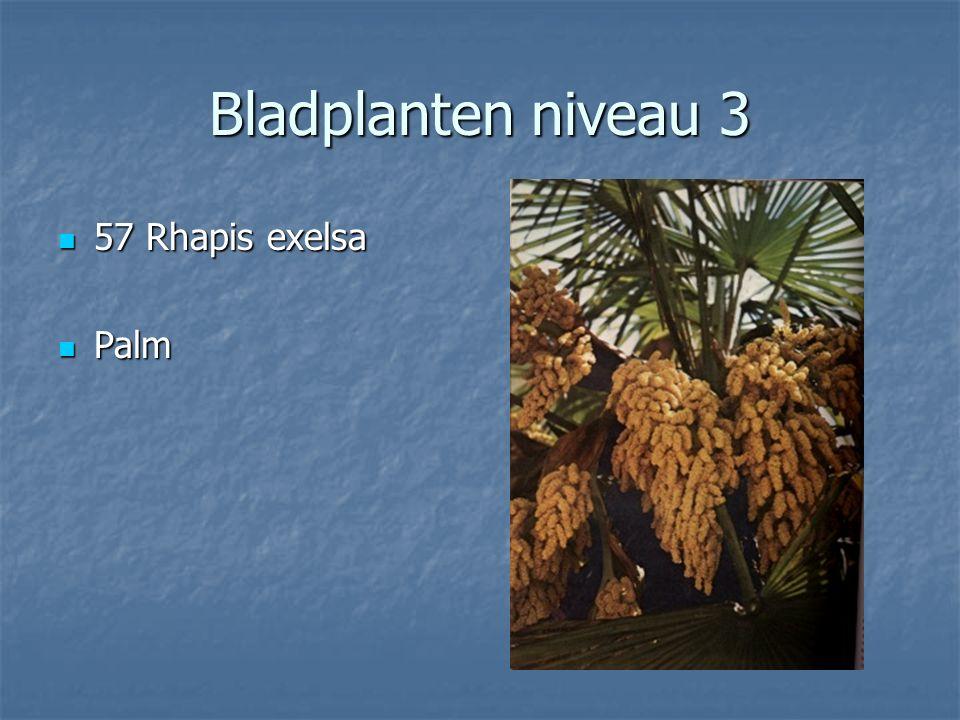 Bladplanten niveau 3 56 Pteris cretica Vleugelvaren Vleugelvaren