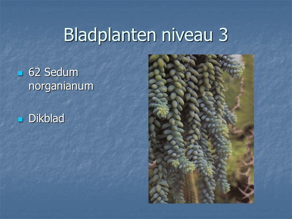 Bladplanten niveau 3 61 Scirous cernuus 61 Scirous cernuus Vouwenhaar Vouwenhaar