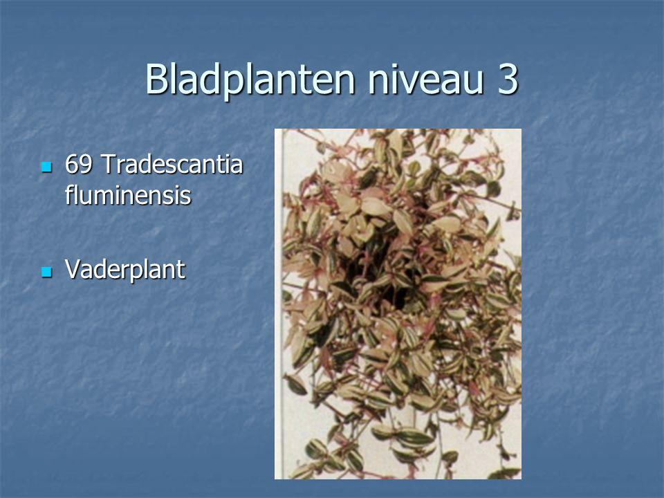 Bladplanten niveau 3 68 Tolmia menziesii 68 Tolmia menziesii Kindje op moeders schoot Kindje op moeders schoot