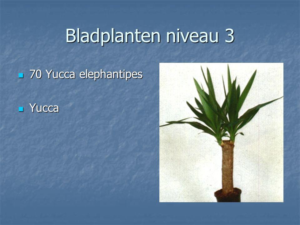 Bladplanten niveau 3 69 Tradescantia fluminensis 69 Tradescantia fluminensis Vaderplant Vaderplant