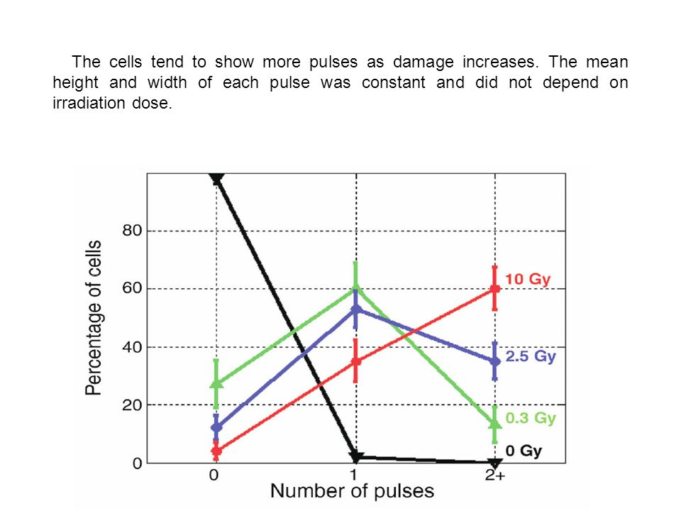 The cells tend to show more pulses as damage increases. The mean height and width of each pulse was constant and did not depend on irradiation dose.