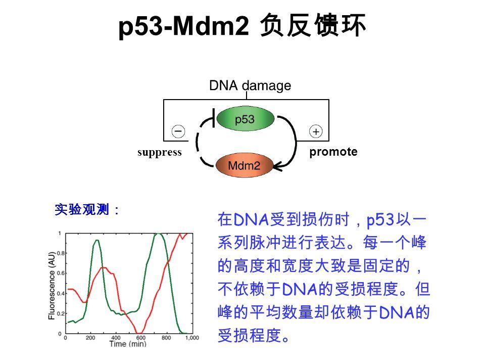 p53-Mdm2 DNA p53 DNA DNA suppress promote