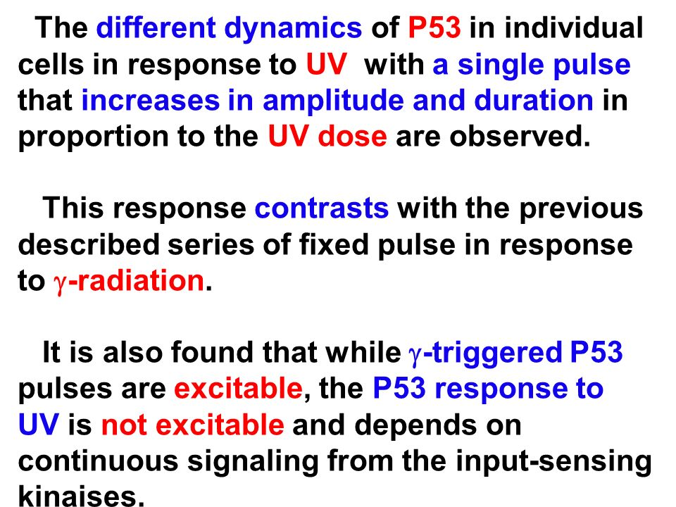 The different dynamics of P53 in individual cells in response to UV with a single pulse that increases in amplitude and duration in proportion to the