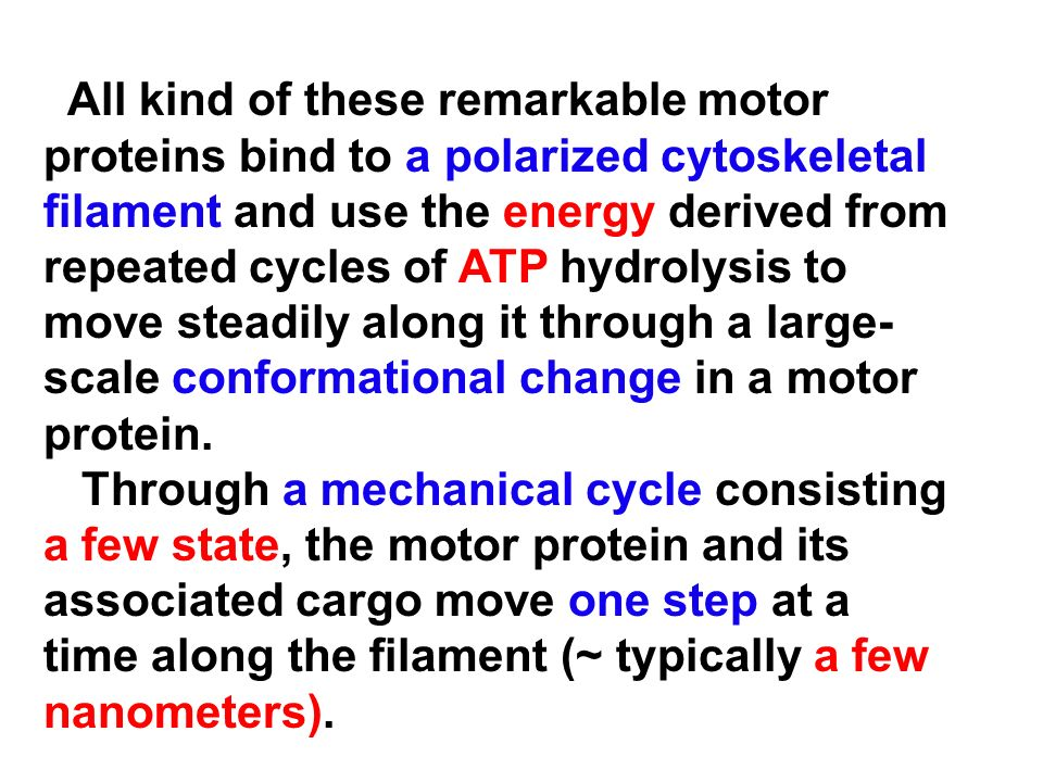 All kind of these remarkable motor proteins bind to a polarized cytoskeletal filament and use the energy derived from repeated cycles of ATP hydrolysi