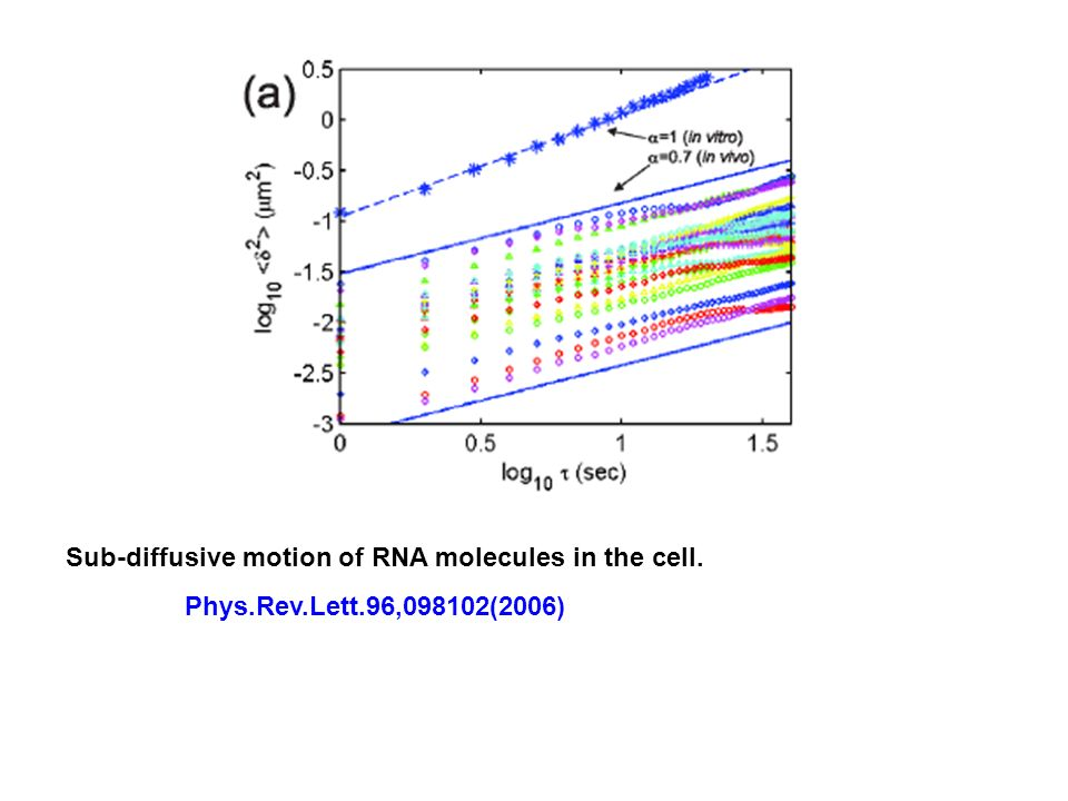 Sub-diffusive motion of RNA molecules in the cell. Phys.Rev.Lett.96,098102(2006)