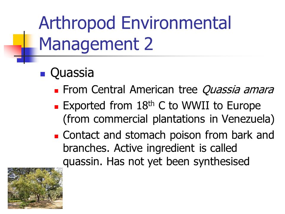 Arthropod Environmental Management 2 Quassia From Central American tree Quassia amara Exported from 18 th C to WWII to Europe (from commercial plantat