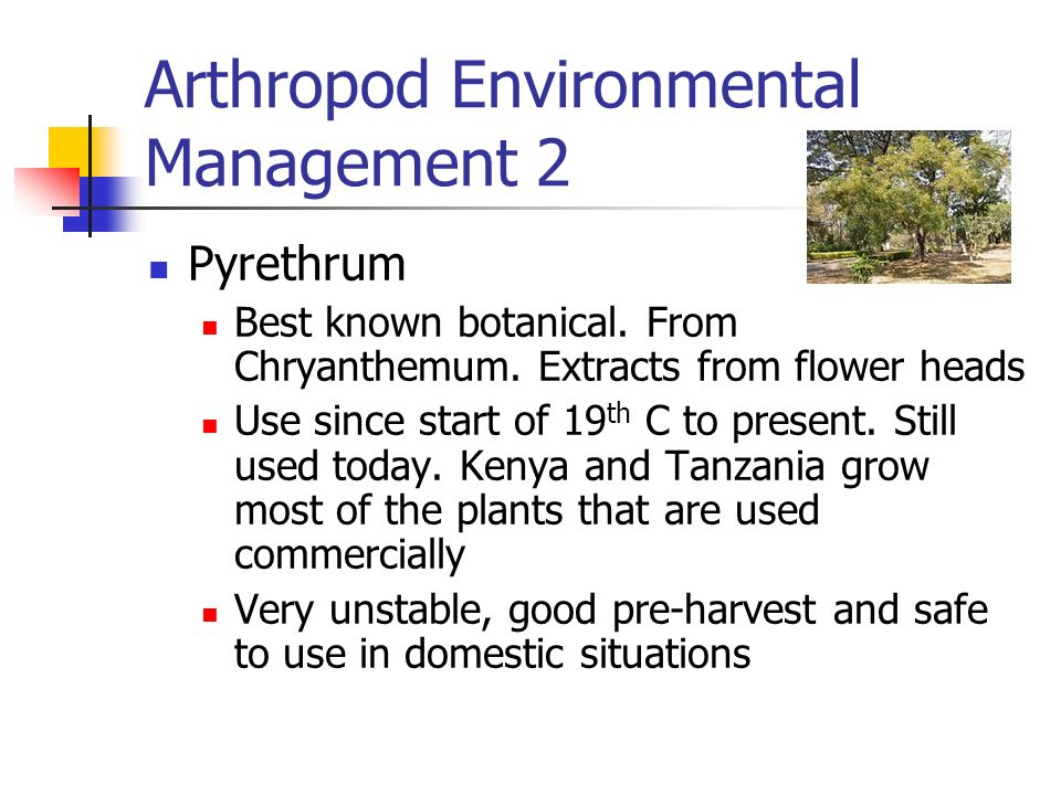 Arthropod Environmental Management 2 Pyrethrum Best known botanical. From Chryanthemum. Extracts from flower heads Use since start of 19 th C to prese