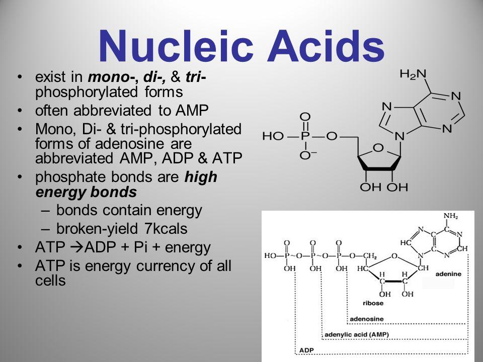 Nucleic Acids exist in mono-, di-, & tri- phosphorylated forms often abbreviated to AMP Mono, Di- & tri-phosphorylated forms of adenosine are abbrevia