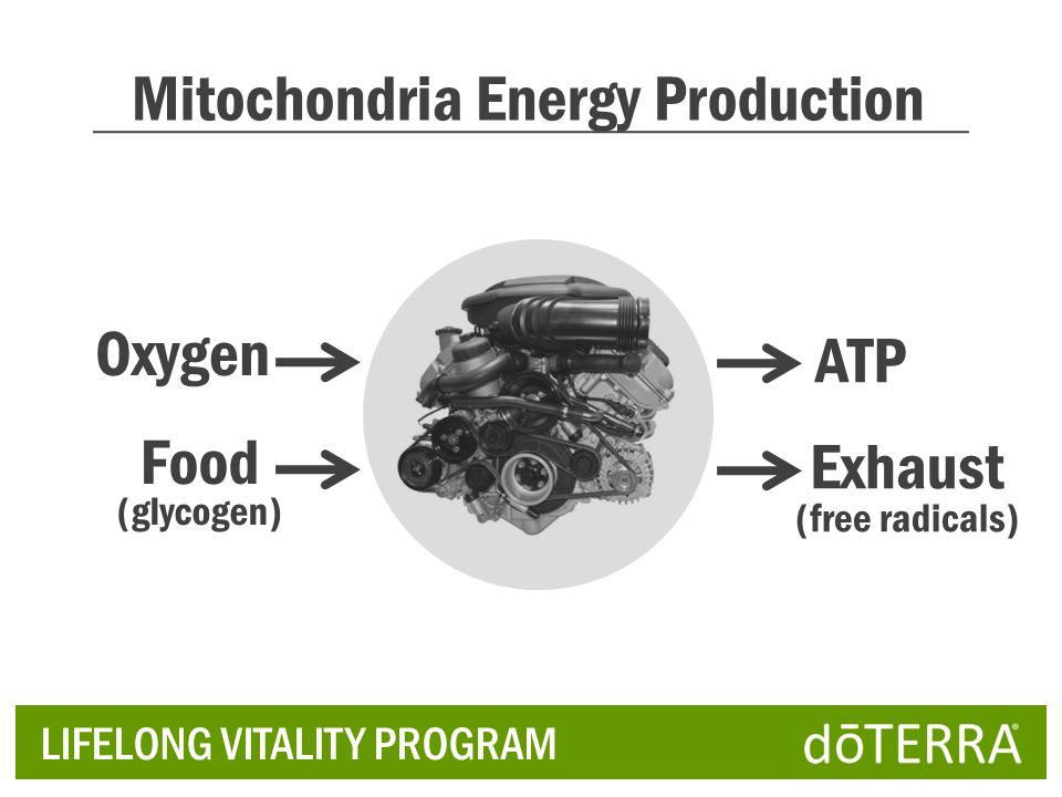 Mitochondria Energy Production Oxygen Food (glycogen) ATP Exhaust (free radicals) LIFELONG VITALITY PROGRAM