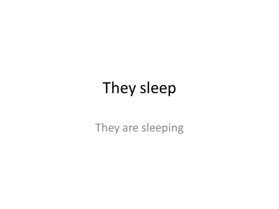 They sleep They are sleeping
