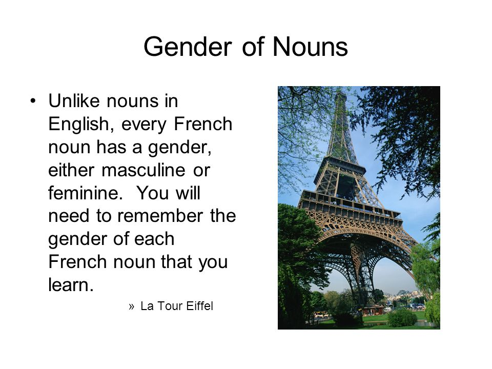 Gender of Nouns Unlike nouns in English, every French noun has a gender, either masculine or feminine. You will need to remember the gender of each Fr