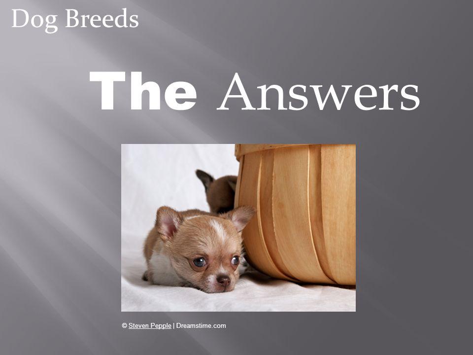 The Answers Dog Breeds © Steven Pepple | Dreamstime.com