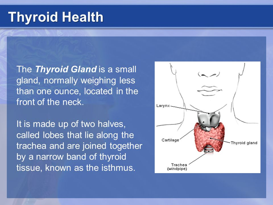 The Thyroid Gland is a small gland, normally weighing less than one ounce, located in the front of the neck. It is made up of two halves, called lobes