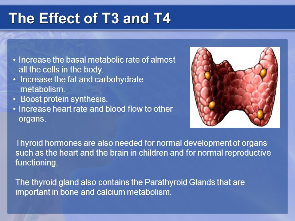 The Effect of T3 and T4 Increase the basal metabolic rate of almost all the cells in the body. Increase the fat and carbohydrate metabolism. Boost pro