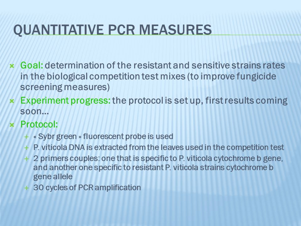 QUANTITATIVE PCR MEASURES Goal: determination of the resistant and sensitive strains rates in the biological competition test mixes (to improve fungicide screening measures) Experiment progress: the protocol is set up, first results coming soon… Protocol: « Sybr green » fluorescent probe is used P.