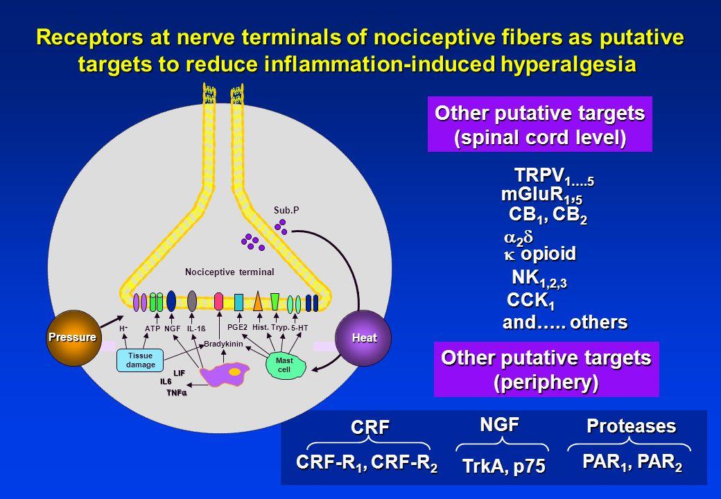 IL6 TNF TNF LIF NGFATP H+H+ IL-1ß PGE2 Nociceptive terminal Sub.P Mast cell 5-HT Hist.Tryp. Pressure Tissue damage Bradykinin Heat Receptors at nerve