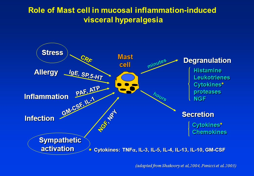 Mastcell Stress Allergy Inflammation Infection Sympathetic activation activation CRF IgE, SP,5-HT NGF, NPY Degranulation Secretion minutes hours GM-CSF, IL-1 PAF, ATP HistamineLeukotrienes Cytokines* proteasesNGF Chemokines * Cytokines: TNF, IL-3, IL-5, IL-4, IL-13, IL-10, GM-CSF (adapted from Shakoory et al,2004, Penicci et al.2003) Role of Mast cell in mucosal inflammation-induced visceral hyperalgesia