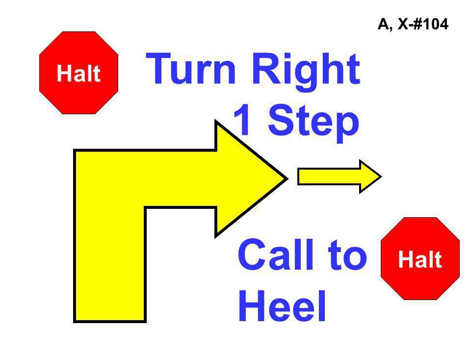 A, X-#104 Turn Right 1 Step Halt Call to Heel Halt