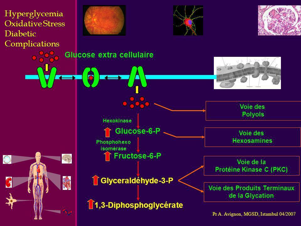 Pr A. Avignon, MGSD, Istambul 04/2007 Glucose-6-P Hexokinase Phosphohexo isomérase Glucose extra cellulaire Fructose-6-P Glyceraldéhyde-3-P 1,3-Diphos