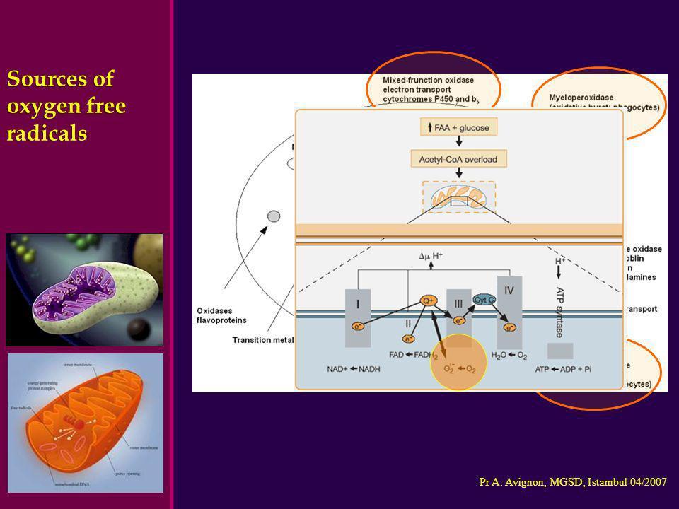Pr A. Avignon, MGSD, Istambul 04/2007 Sources of oxygen free radicals