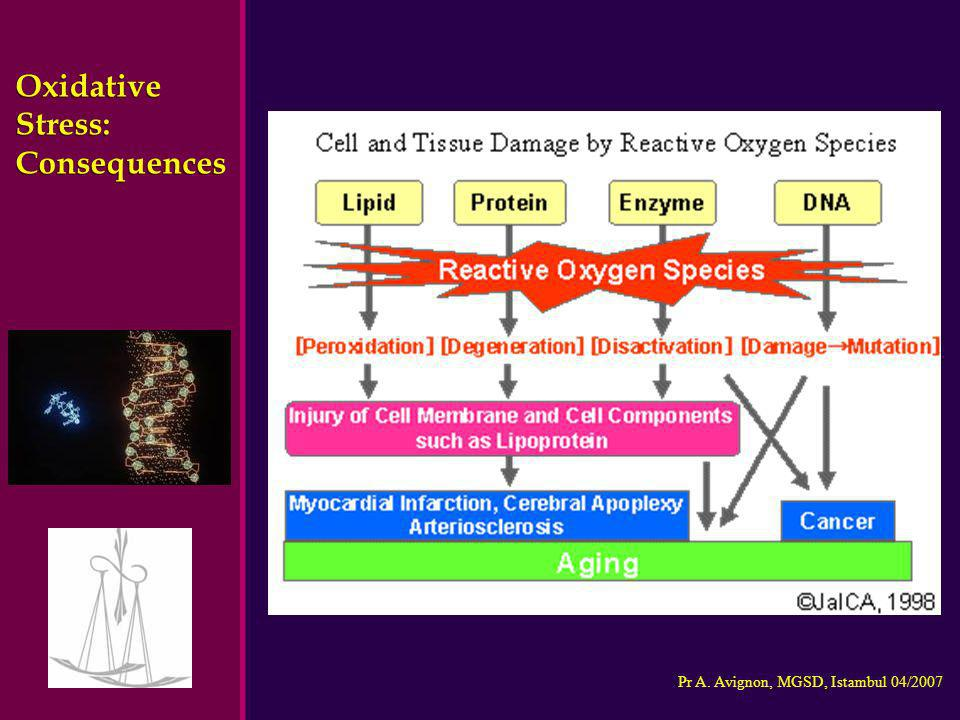 Pr A. Avignon, MGSD, Istambul 04/2007 Oxidative Stress: Consequences