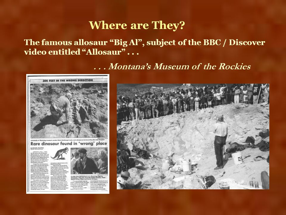 Where are They? The famous allosaur Big Al, subject of the BBC / Discover video entitled Allosaur...... Montanas Museum of the Rockies