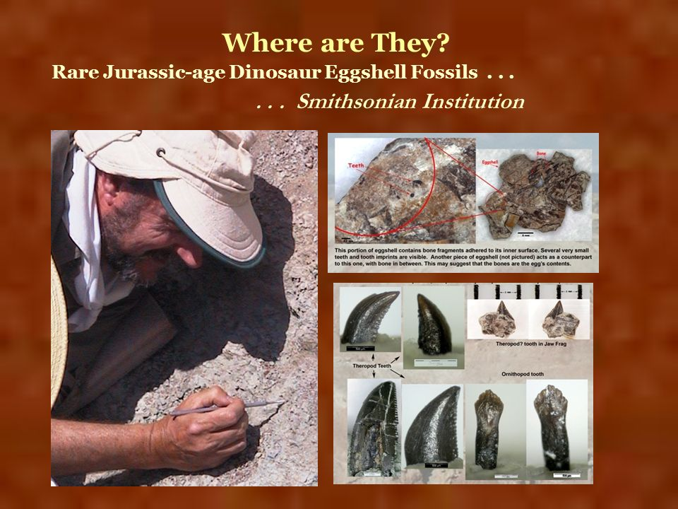 Rare Jurassic-age Dinosaur Eggshell Fossils...... Smithsonian Institution Where are They?
