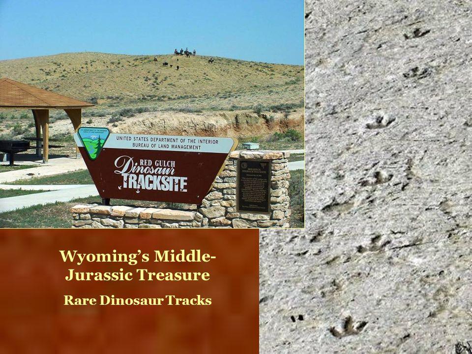 Wyomings Middle- Jurassic Treasure Rare Dinosaur Tracks