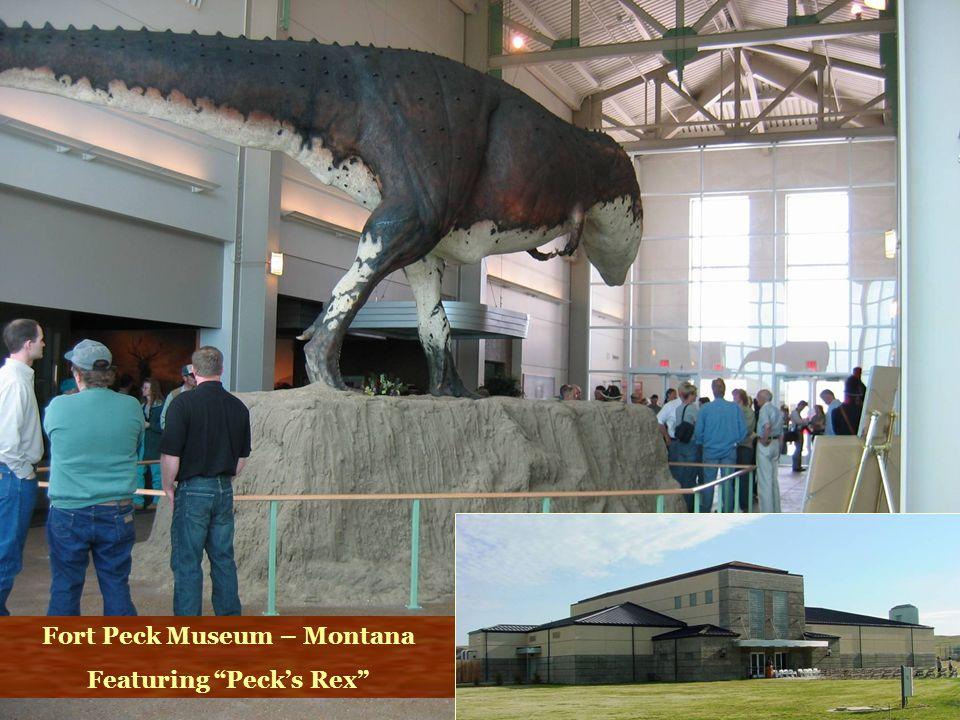 Fort Peck Museum – Montana Featuring Pecks Rex