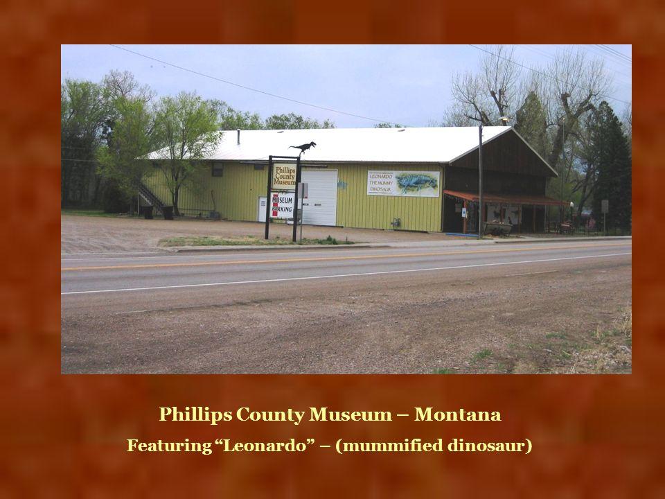 Phillips County Museum – Montana Featuring Leonardo – (mummified dinosaur)