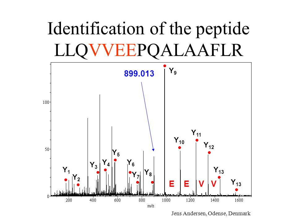 Identification of the peptide LLQVVEEPQALAAFLR Y1Y1 Y2Y2 Y3Y3 Y4Y4 Y5Y5 Y6Y6 Y7Y7 Y8Y8 Y 10 Y 11 Y 12 Y 13 Y9Y9 899.013 Y 13 EEVV Jens Andersen, Odens