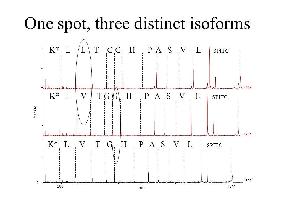 K* L L T G G H P A S V L SPITC K* L V T G H P A S V L SPITC K* L V T G G H P A S V L SPITC m/z 200 1400 Intensity 0 1392 1435 1449 One spot, three distinct isoforms