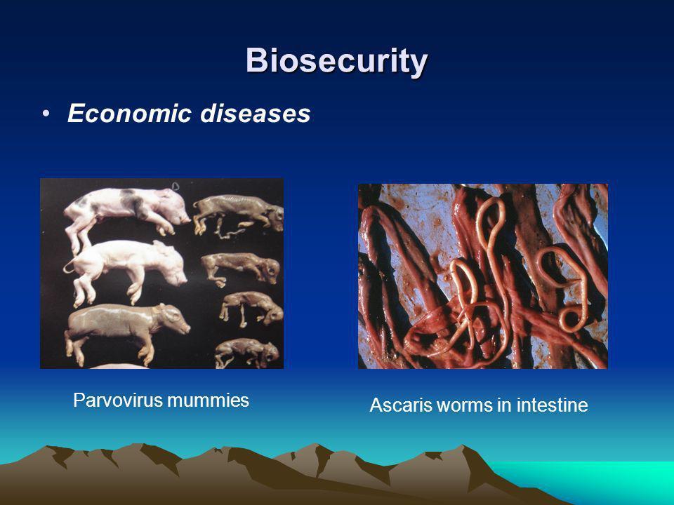Biosecurity Economic diseases Parvovirus mummies Ascaris worms in intestine