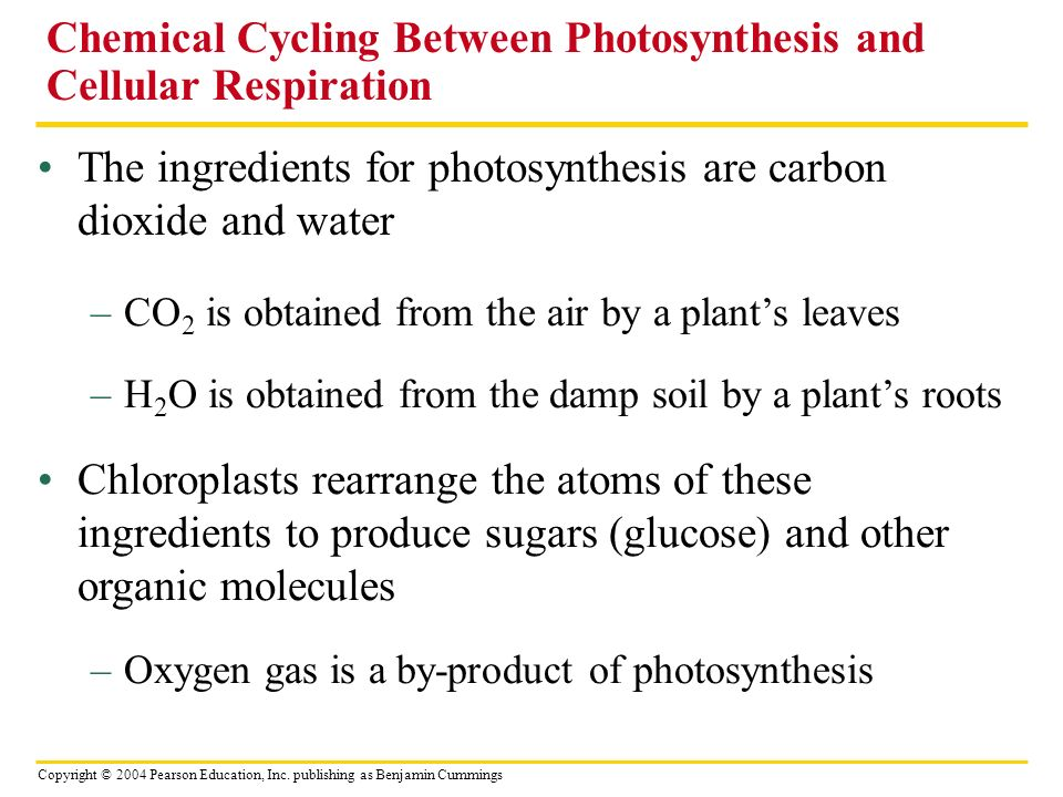 Copyright © 2004 Pearson Education, Inc. publishing as Benjamin Cummings The ingredients for photosynthesis are carbon dioxide and water –CO 2 is obta