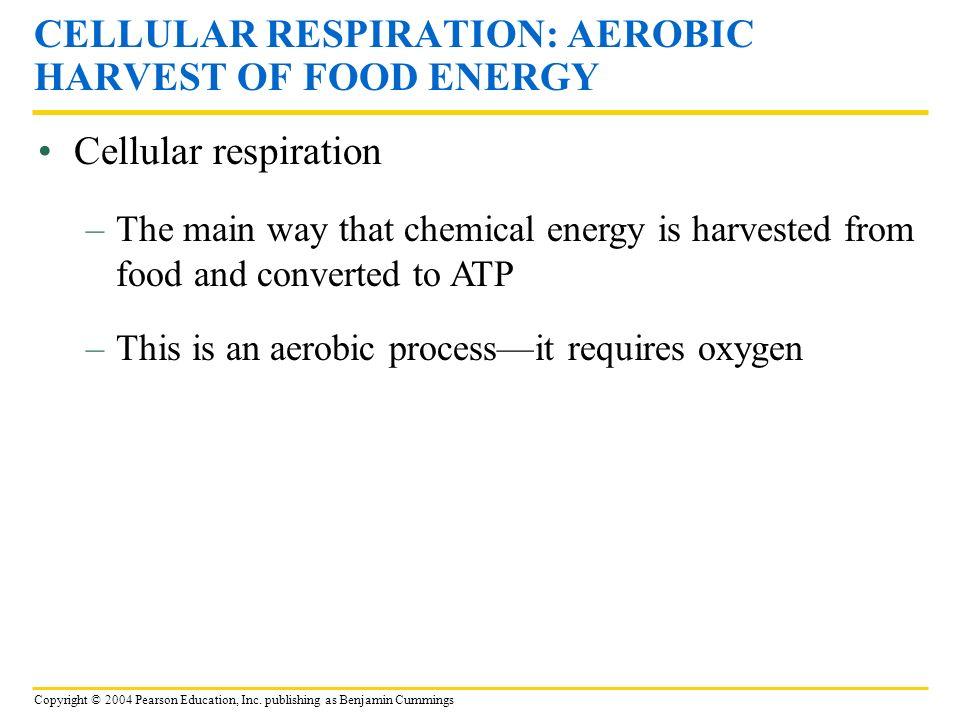 Copyright © 2004 Pearson Education, Inc. publishing as Benjamin Cummings Cellular respiration CELLULAR RESPIRATION: AEROBIC HARVEST OF FOOD ENERGY –Th
