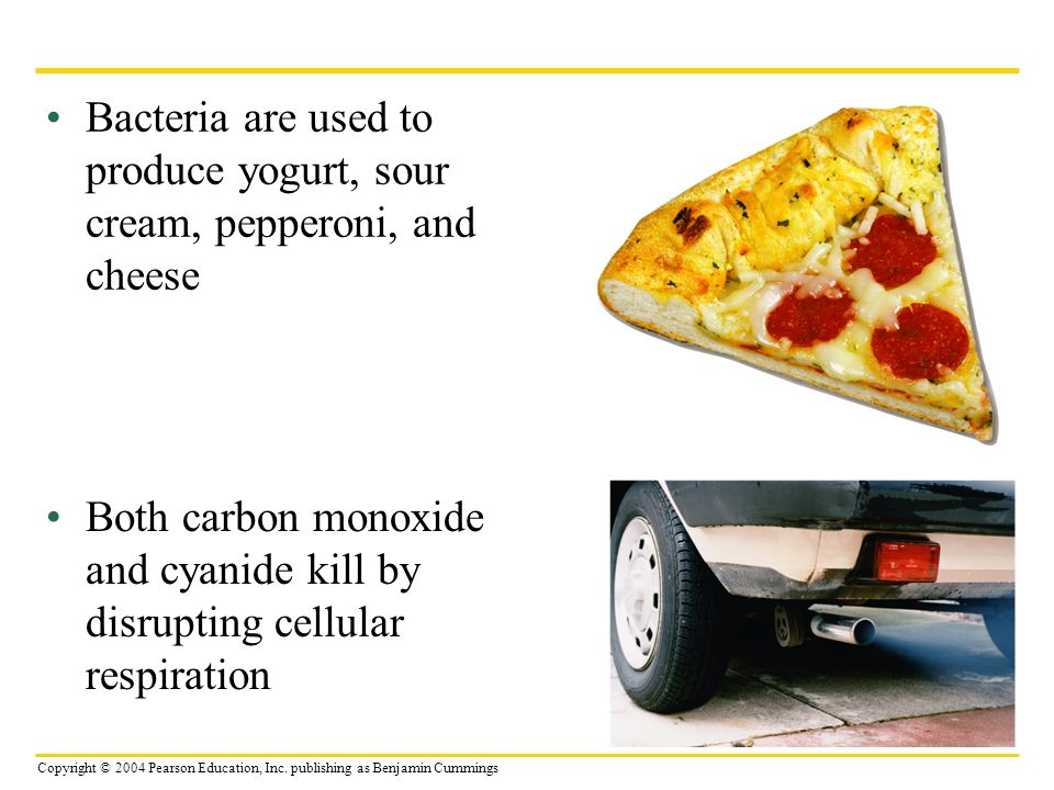 Copyright © 2004 Pearson Education, Inc. publishing as Benjamin Cummings Bacteria are used to produce yogurt, sour cream, pepperoni, and cheese Both c