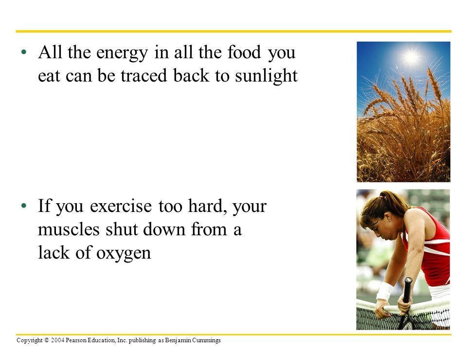 Copyright © 2004 Pearson Education, Inc. publishing as Benjamin Cummings All the energy in all the food you eat can be traced back to sunlight If you