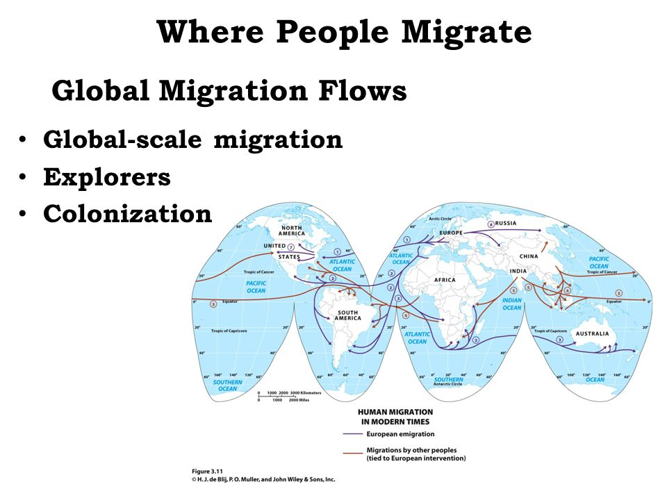 Global Migration Flows Where People Migrate Global-scale migration Explorers Colonization