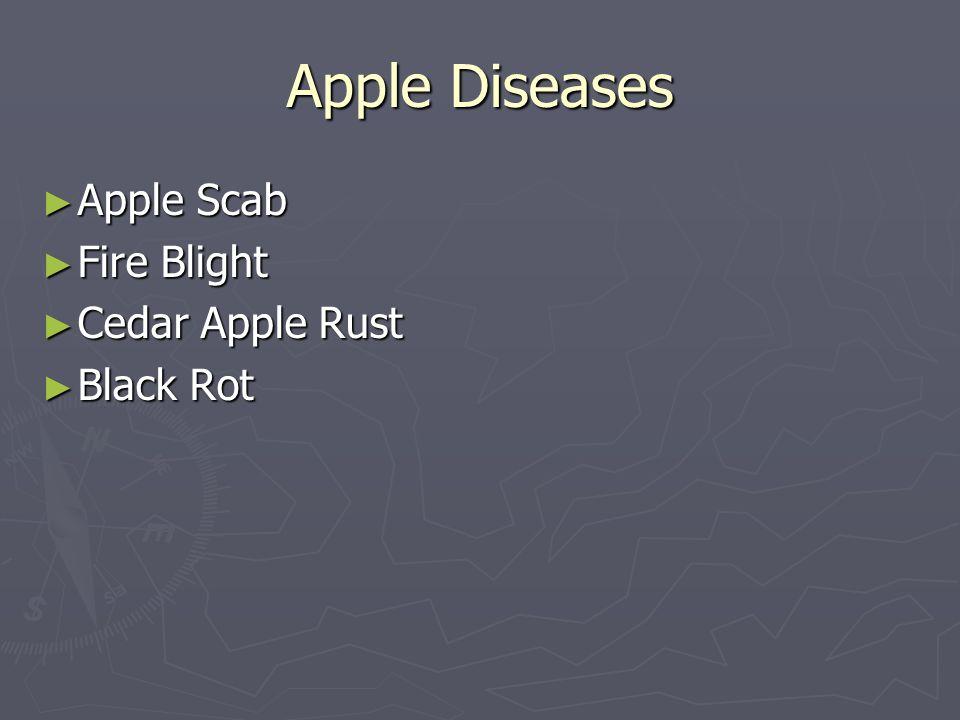 Apple Diseases Apple Scab Apple Scab Fire Blight Fire Blight Cedar Apple Rust Cedar Apple Rust Black Rot Black Rot