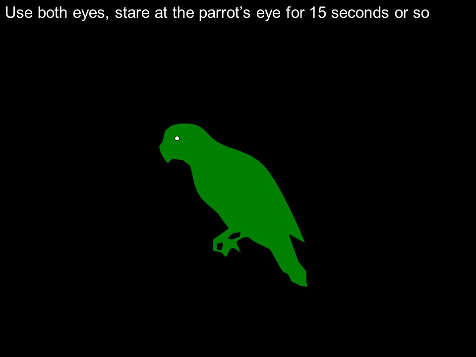 Use both eyes, stare at the parrots eye for 15 seconds or so